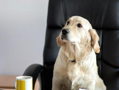 Amazon приютил в главном офисе 6000 собак. Зачем?