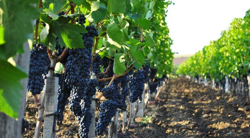 Beluga Group приобретает винодельческое хозяйство «Вилла Романов»