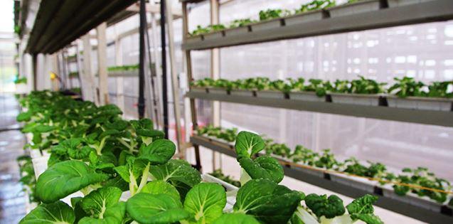Основатель «ВкусВилла» инвестировал в создание городской фермы