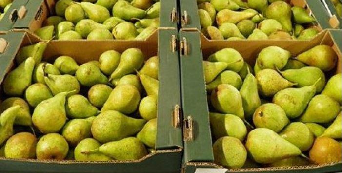 Производители из Бельгии и Нидерландов в обход санкций поставили в Россию груши на €240 млн