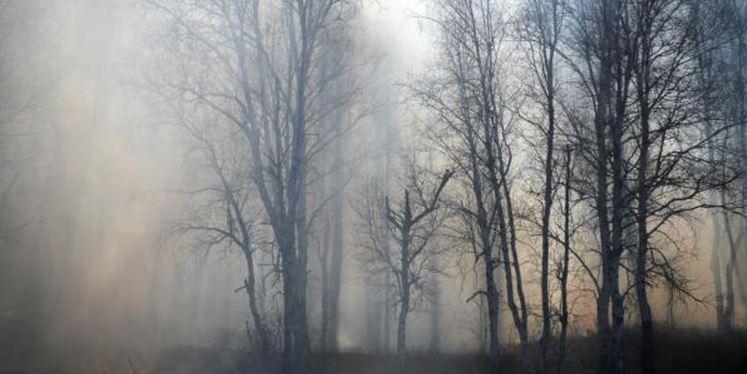 Из-за лесных пожаров в Курганской области запретили продажу алкоголя